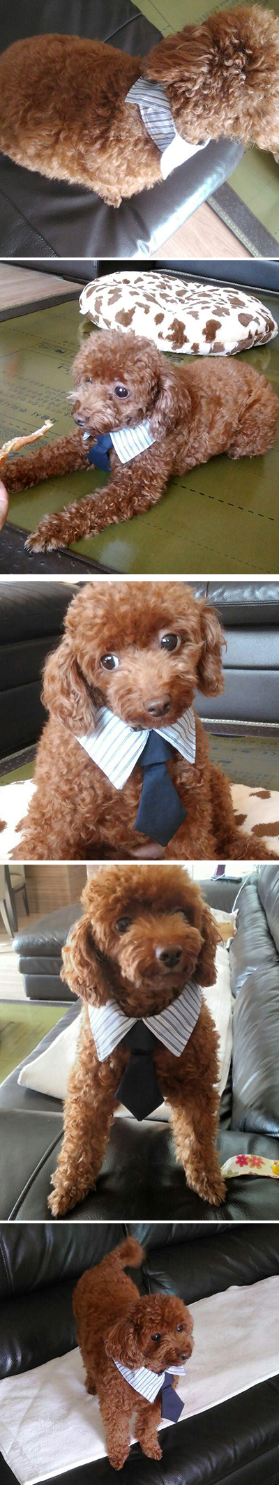 dog_necktie4.jpg