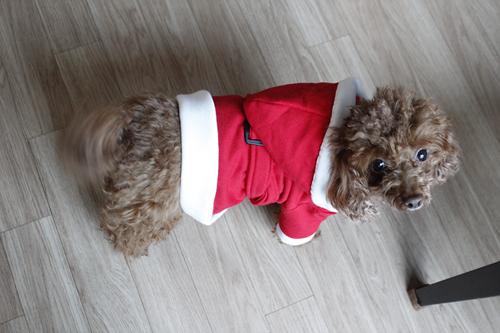 강아지산타옷만들기 (16).jpg