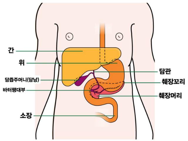 췌장위치.jpg