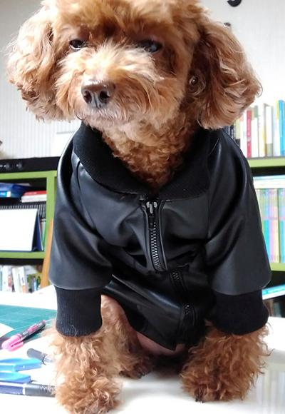 dogouter17.jpg